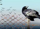 vrije vogels
