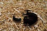 yingyang cats