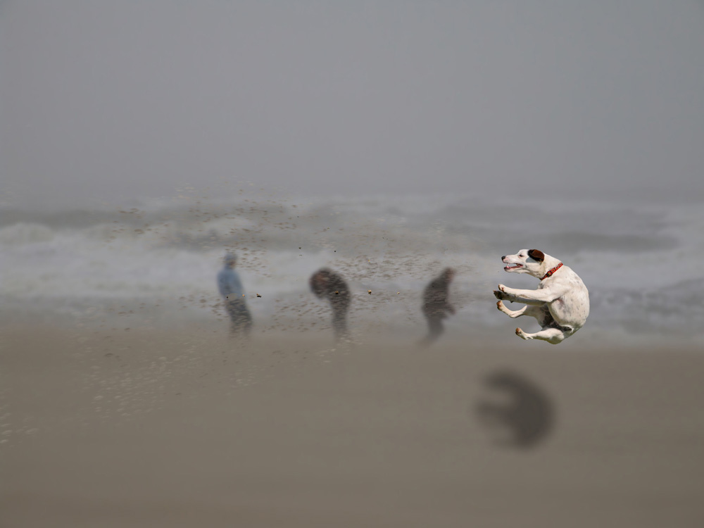 hondje in de storm